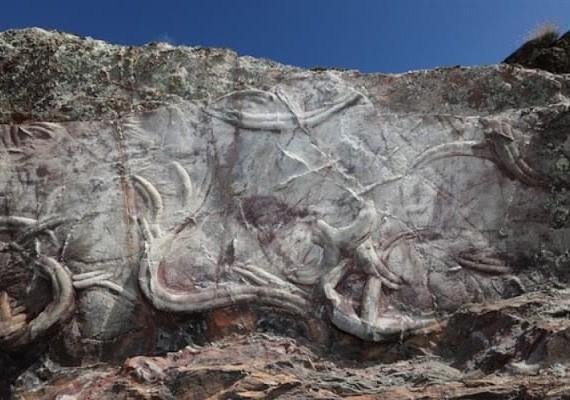 icnofósseis no Geopark naturtejo
