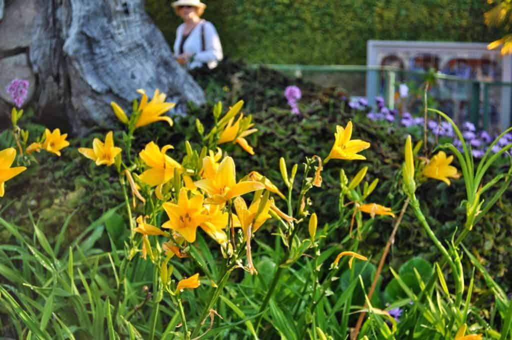 jardim municipal, no Funchal