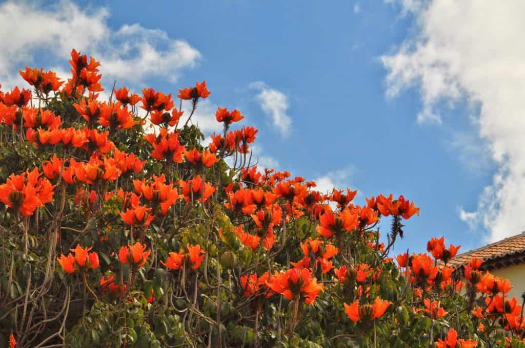 flores num dos Jardins da Madeira