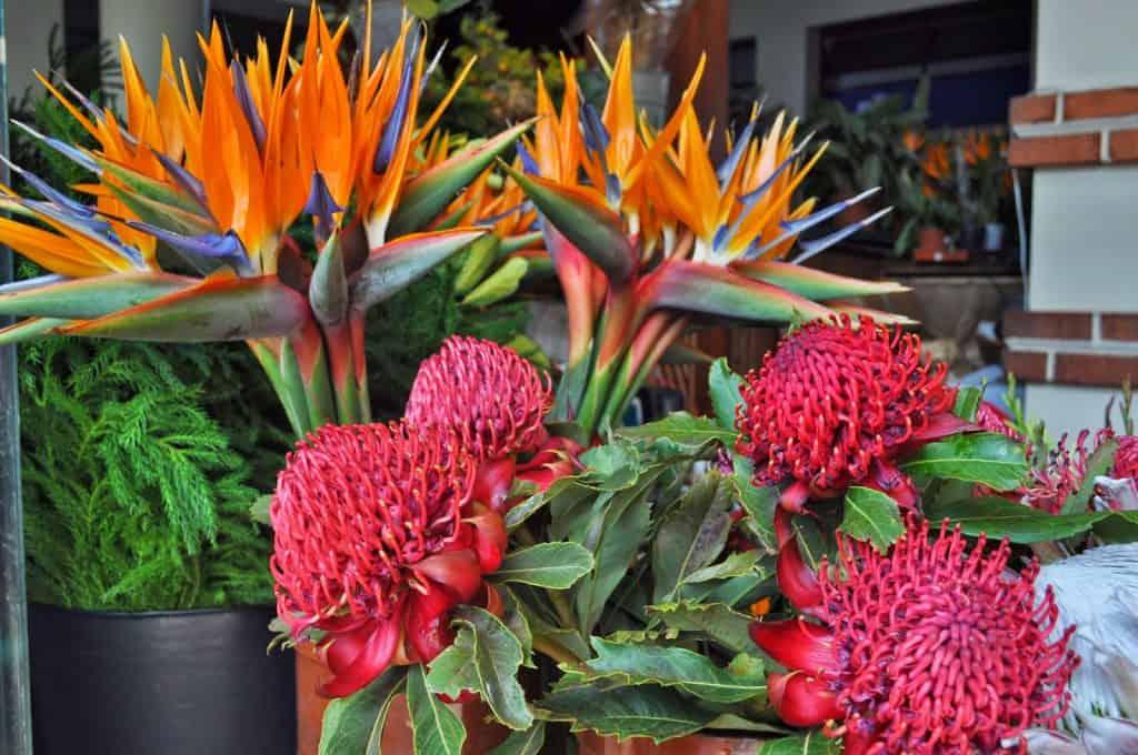 flores no Mercado dos Lavradores
