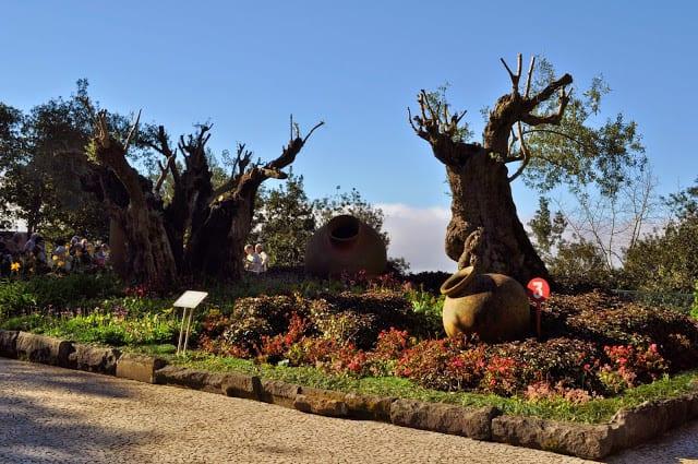 oliveiras milenares