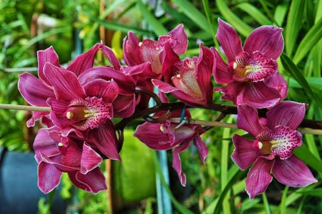 orquídea no Jardim Tropical Monte Palace
