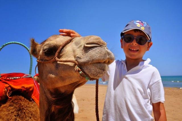 Camelo em Marrocos