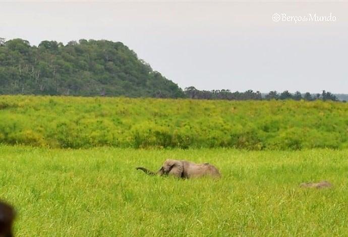 elefantes no Kissama