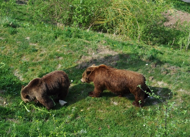 Ursos de Berna, na Suíça