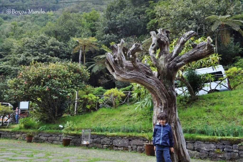 a laurissilva é a maior maravilha da natureza da Madeira