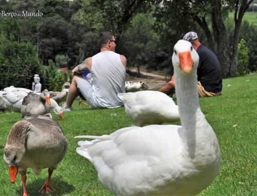 Primavera em Portugal | Dicas para viajar e ser feliz