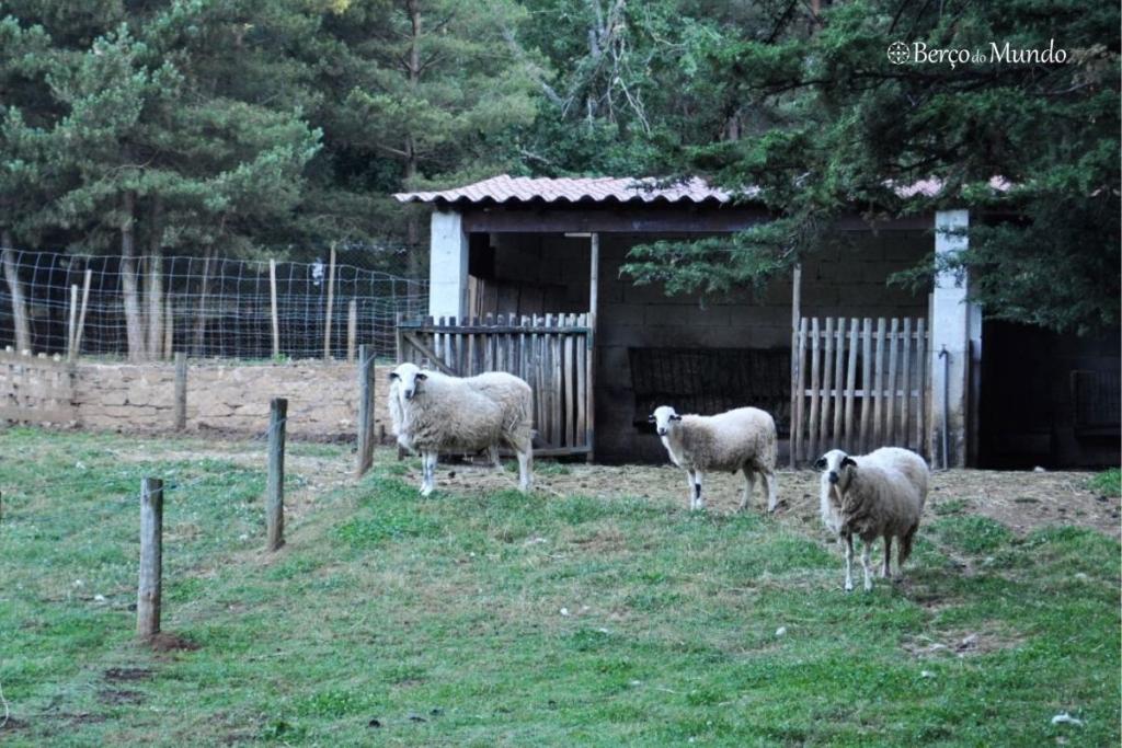 raças autóctones no Parque Biológico de Vinhais