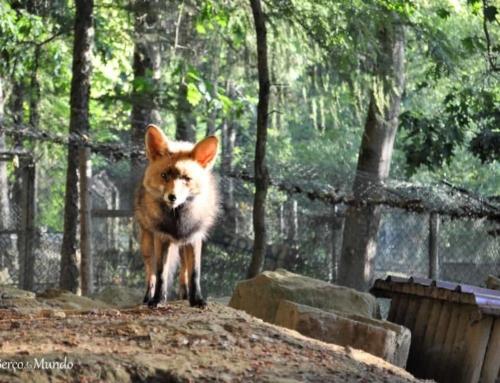 Parque Biológico de Vinhais, um retiro no Montesinho