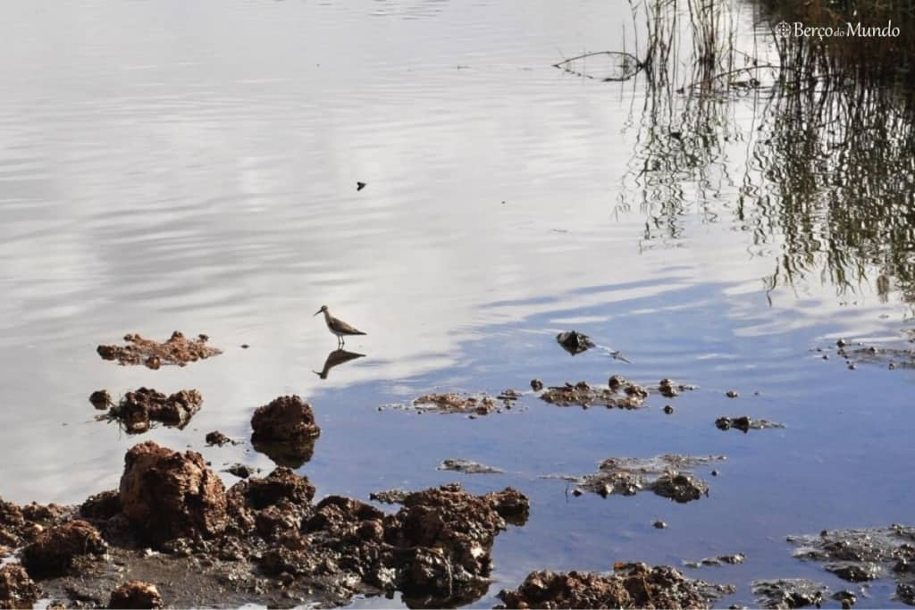 ave na Lagoa de Óbidos
