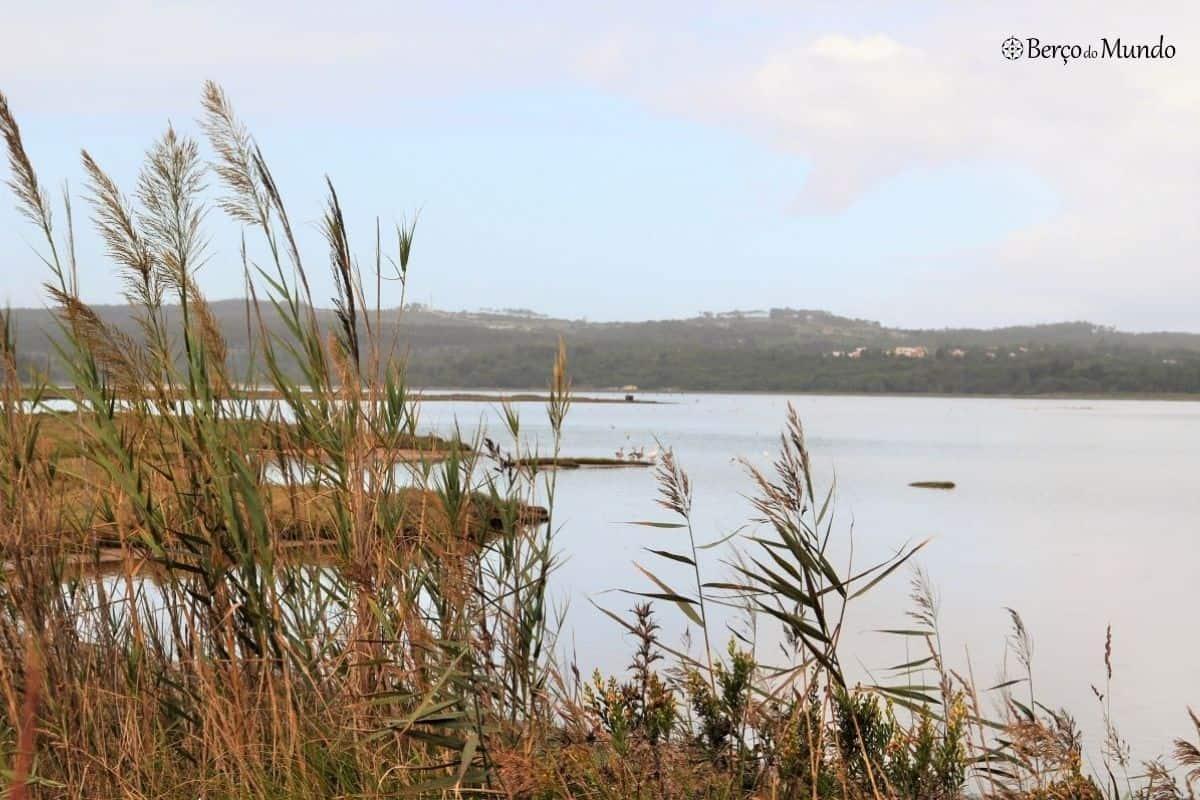 patos na Lagoa de Óbidos