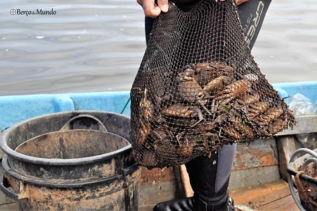 resultado da pesca