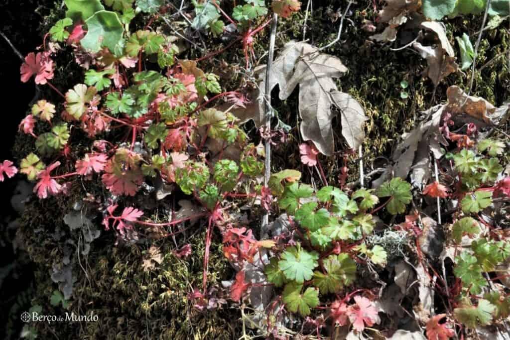 detalhe da Natureza no PR10