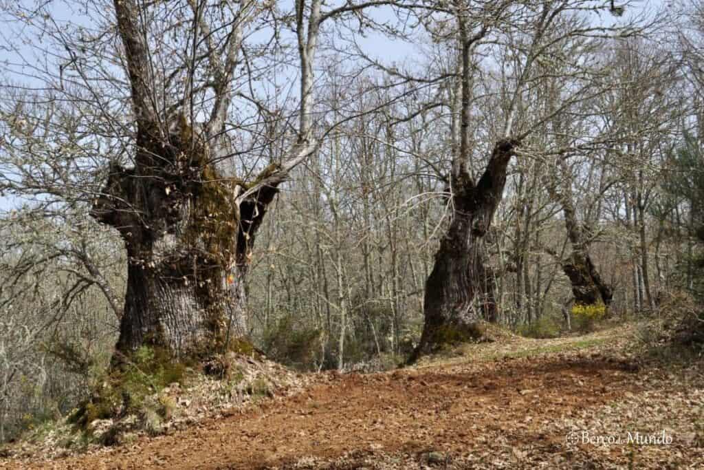 caminho assinalado nas árvores